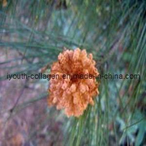 China Pine Pollen, Health Food on sale