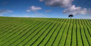 China Fertilizers on sale