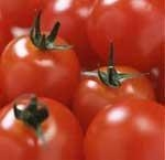 China Cherry & Cocktail Tomatoes 28gr to 32gr Greenhouse and Field Tomatoes on sale