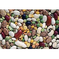Beans, Pulses, & Popcorn