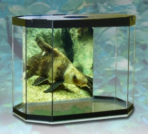 China Table Top Aquarium Fish Tank on sale