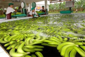 China Banana on sale