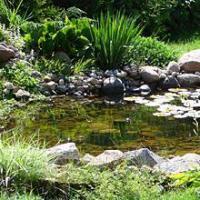 Algreen Deluxe 400 Gallon Liner Pond Kit