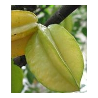 China Fresh Star Fruit on sale