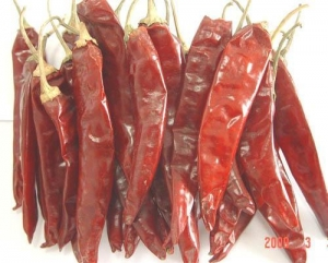 China SPICES Jinta Chilli on sale