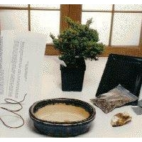 China Starter Kit - Juniper ProcumbensMake Your Own Bonsai Tree on sale