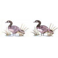 China Vector art wild duck Candian Geese goose bird fow_6 on sale