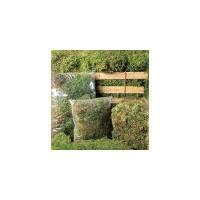 China Green Spagnum Moss 4 Quart on sale