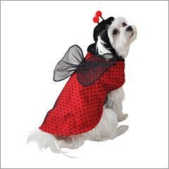 China Ladybug Halloween Dog Costume on sale