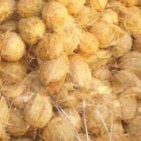 China Husked Coconut on sale