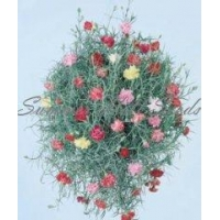 Carnation Cascading Clove Drops