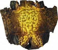 China Genuine frog / toad skin FROGSK01 Yellow on sale