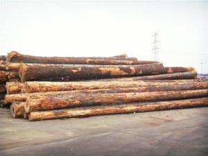 China >>wood on sale