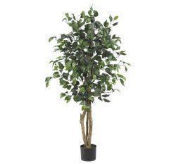 China Silk Trees on sale