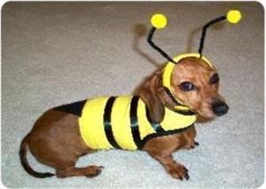 China Bumblebee Dog Costume on sale