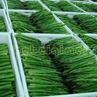 China IQF VEGETABLE AND FRUITS Frozen Oganic Green Asparagus on sale