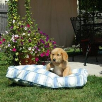 China & Pet Living Pool & Patio Rectangle Pet Bed on sale