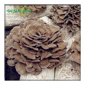 China Maitake Mushroom Extract on sale