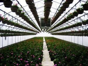 China Freestanding Greenhouse on sale