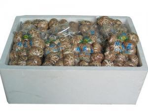 China Fresh Mushroom TC0101-04 on sale