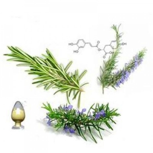 China Standard Herb Extracts Rosemary Extract on sale