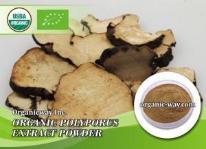 China Organic Umbellate pore fungus extract powder on sale