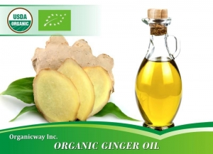 China Organic Ginger oil on sale