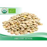 Organic Lentil