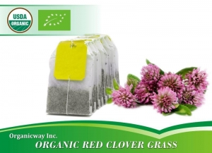 China Organic Red Clover Grass on sale