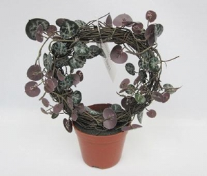China Artificial Plants 13CM(D) X 23CM(H) ROSARY VINE IN ROUND SHAPE ON BROWN PLASTIC POT. on sale