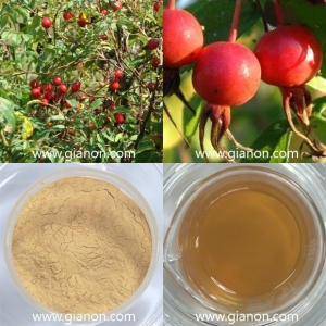 China Rose hip Extract on sale
