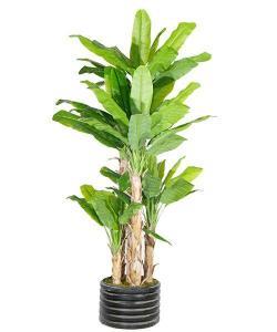 China Artificial Large Trees Big banana Y8328-77-5TS on sale