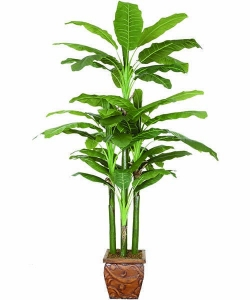China Artificial Large Trees 10 feet big banana Y8328-57-5P on sale