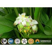 Botanical extract| Curcuma longa extract |curcumin