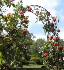 China Rose arch - ideal garden beautification for climbing plants rose on sale