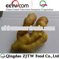 Agriculture fresh young ginger/laiwu fresh ginger