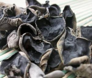 China Auricularia Auricula on sale