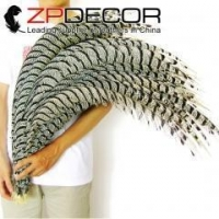 ZPDECOR Natural Zebra Lady Amherst Pheasant Tail Feather