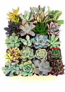 China Shop Succulents Unique Succulent Collection of 5 on sale
