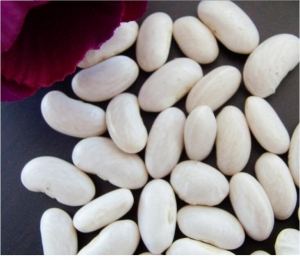 China Spanish Type White Kidney Beans on sale