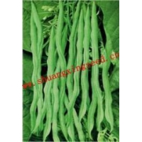 China Watermelon seeds SX Kidney Bean Seeds No.1406 on sale