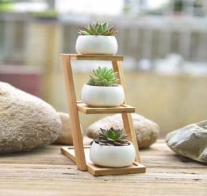 China Flower Pots With Bamboo Rack / Set Of 3 Mini White Ceramic Flower Pots on sale