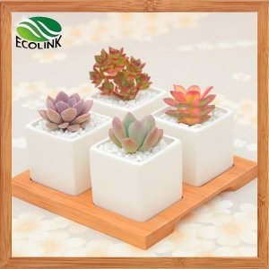 China 4 Combination Square Ceramic Succulent Pot With Bamboo Stand on sale