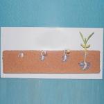 Development & Growth Demonstrational Model Of Bean Seed