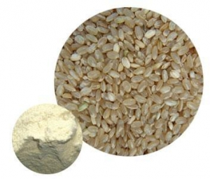 China Brown Rice Protein on sale