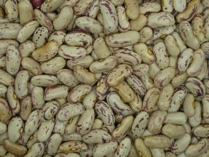 China LIGHT SPECKLED KIDNEY BEAN LONG SHAPE on sale