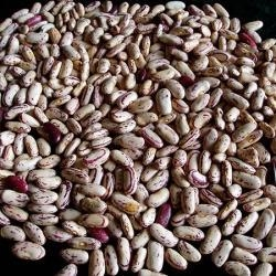 China Light Speckled Kidney Beans(Long Shape) on sale