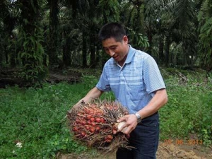 China Indonesia: 100 TPD palm oil production line on sale