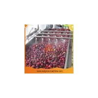 China Peach Apricot Plum Fruit Processing Machine on sale