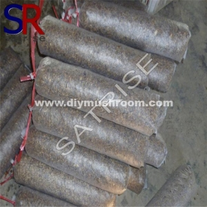 China Wholesale fresh bottom price shiitake mushroom log spawn cultivating on sale